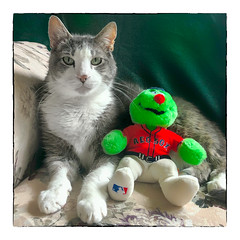 Chillin' with Wally (Timothy Valentine) Tags: 0719 wally quinnomannion happycaturday datesyearss 2019 home cat eastbridgewater massachusetts unitedstatesofamerica