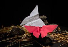 PIC OF PAPER (Pepenera) Tags: picofpaper smileonsaturday stilllife fotografia photography butterfly