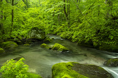 Mountain stream in the deep green (Tom Hanawa) Tags: ã°ãªã¼ã³