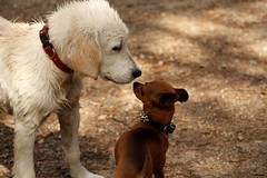Love to the first sight (Nora077) Tags: dogs noratoth