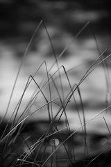 bent (courtney065) Tags: nikond800 nature landscapes flora foliage grasses orbs bokeh blurred abstract artistic blackandwhite bw monochrome wetland wetlandgrowth sky clouds dark mystery