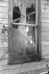 Window (Un)Dressing (macromary) Tags: analog bw abandoned film window 35mm vintage 50mm blackwhite nikon florida f14 f100 monotone nikonf100 southern 35mmfilm vintagecamera filmcamera nikkor rodinal derelict urbex foma fomapan100 blackandwhitefilm netcurtain fomapan putnamcounty 50mmlens mechanicalcamera analogphotograph rurex flurbex