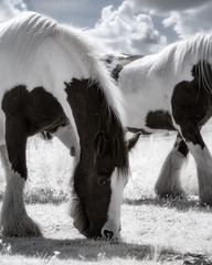 Infrared Horses (GeorgeKBarker) Tags: infrared horse horses grazing grass mare stallion mane hair head ear white sky clouds eating shadow light colour faux false