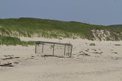 Protective Piping Plover Nest Cage (brucetopher) Tags: beach nationalpark dune dunes wilderness wildlife park land landscape sand beachgrass holiday vacation 4thofjuly fourthofjuly independence sea ocean atlantic pipingplover endangered bird birds seabird creature cage animal protection endangeredspecies habitat criticalconcern piping plover
