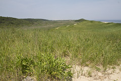 Looking North over the Dunes (brucetopher) Tags: beach nationalpark dune dunes wilderness wildlife park land landscape sand beachgrass holiday vacation 4thofjuly fourthofjuly independence sea ocean atlantic path travel sightseeing hike overlook green grass eelgrass nature