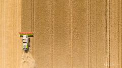 Laisse planer ta vision....! - Let your vision hover ....! (minelflojor) Tags: moissonneuse blé récolte été soleil planer champ vue paysage terre moisson machineagricole épi machine harvester wheat harvest summer sun hovering field view landscape land harvesting agriculturalmachine epi dji mavicair drone