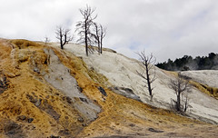 Mammoth Hot Springs - Yellowstone National Park, WY (SomePhotosTakenByMe) Tags: mammothhotsprings mammoth wyoming yellowstone nationalpark yellowstonenationalpark outdoor trail hike wanderung usa america amerika unitedstates natur calcareoussinter sinterterrasse sinter