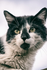 Stray Cat (John Fenner) Tags: olympus em1 markii mirrorless micro43rds mzuiko 60mm f28 macro prime cat feline animal nature portrait black white