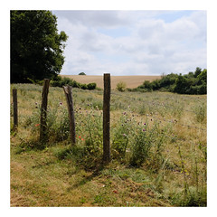 La clôture (DavidB1977) Tags: france picardie hautsdefrance oise bouillancy haie fleurs fujifilm x100f carré clôture