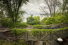 (A Great Capture) Tags: agreatcapture agc wwwagreatcapturecom adjm ash2276 ashleylduffus ald mobilejay jamesmitchell toronto on ontario canada canadian photographer northamerica torontoexplore summer summertime été sommer 2019 green lush vines trees waterfront lakeontario lake