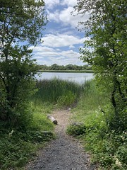 Trail To The Lake - Dromore Lake / Dromore Wood - County Clare, Ireland. (firehouse.ie) Tags: ireland lake water landscape landscapes lakes lakeside waters waterscape waterscapes dromore july2019 wood forest woods path forestry hike trail hikr summer summertime