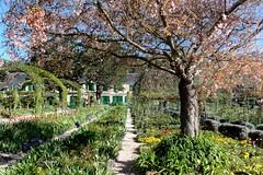 Pathways in Monet's Garden, Giverny, France (Joseph Hollick) Tags: giverny france monetsgarden monet path pathway garden