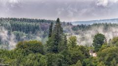 12072019-DSC_0016 (vidjanma) Tags: engreux arbres brume maisonbleue été