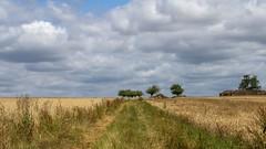 Campagne Briarde (garpar) Tags: campagne coulommiers seineetmarne iledefrance garpar d7500 nikon paysdecoulommiers paysage agriculture agricole ciel bleu brie france nuage