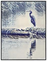 Blue Heron - iPhone app edit. (gks18) Tags: iphoneapp lightroom nik canon heron nature art blue