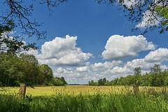 landscape (Jos Mecklenfeld) Tags: forest wald bos nature natur natuur schapenparkodoorn sonya6000 sonyilce6000 sonyepz1650mm selp1650 niederlande landscape landschaft landschap nederland odoorn drenthe netherlands