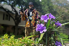 Fake Jay Action Figure and the Mexican Ruellia (baldheretic) Tags: 16scalecamera 16camera actionfigure toy photographer miniature 16scale