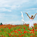 Poppies # 03