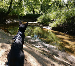 Lazy Summer Day (annette.allor) Tags: cat outdoors black stream woods water feline adventure birds watching outside creek kakashi