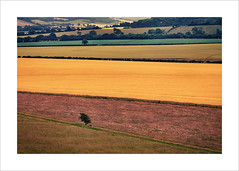 Layers (Nigel Morton) Tags: landscape detail hills farm farmland fields bucks buckinghamshire ivinghoe beacon crops rolling outdoors arable ashridge evening