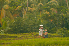 Going Home (delliejr) Tags: workers ricenaturegreenwomen