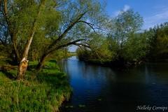 Seege (Nelleke C) Tags: 2019 elbe laasche seege duitsland germany holiday landscape landschap river rivier spring vakantie voorjaar
