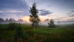 Evening landscape in a wild field with fog (czdistagon.com) Tags: forest sky green fog summer sunset landscape field nature sunrise mist rural grass meadow evening blue outdoor tree panoramic morning dawn panorama cloud scenic idyllic background beautiful tranquil plant silhouette environment dusk scene sunbeam serene day land horizon light wood wildflower vibrant travel russia nobody birch