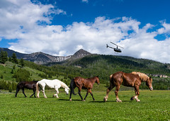 Travel Options... (Trey Ratcliff) Tags: montana yellowstone silver tip horse horses herd helicopter chopper team flight fly graze mountain grass hdr aurorahdr treyratcliff stuckincustoms stuckincustomscom usa