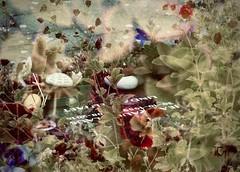 graf JP (delnaet) Tags: jp graf urnekelder grave tomb tombe zuiderbegraafplaats gent ghent gand cimetière cementerio ganzerik potentilla rosa rood rouge dood mort death cimitero tumba auto rouw mourning graveyard husband