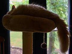 Sundance (S&L Smith) Tags: happycaturday cat sundance green alabama nikon d810 nikon3570f28