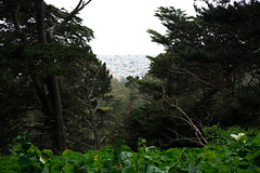 (chris.peplin) Tags: layers trees distance goldengatepark hill sanfranciscobotanicalgarden sanfrancisco
