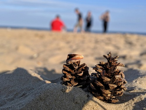 Pine cones on a beach