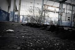 Dying Ground (intheDarkRoom) Tags: abandoned shadows desolation decay ghostly desolant abbandono urbex decadenza nikon fabbrica depressive angoscia factory ruins exploration turin obsolete espace empty