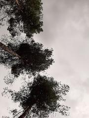 Nublado (avillaltal) Tags: arbol tree madrid españa espagne spain nublado cloudy nubes clouds