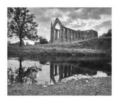 Bolton Priory (Mark & Deborah Waddington) Tags: blackwhite blackandwhite bw monochrome ilford filmphotography westyorkshire water trees mamiya analogue markwaddington landscape boltonabbey boltonpriory ruin abbey film mamiyarb67 6x7