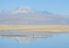 Andes Mountains, with Andean Avocets (Ruby 2417) Tags: avocet bird wildlife nature salar atacama desert salt flat wetlands marsh water reflection andes mountain