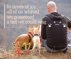In times of joy (silvanagjergji) Tags: