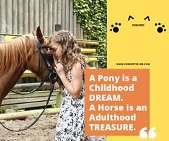 A pony is (silvanagjergji) Tags:
