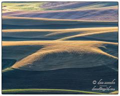 Geometry over Geography (zen3d ☯) Tags: grain wheat harvest palouse hills rollinghills