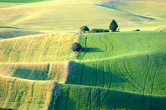 The rolling hills of the Palouse. (dmeeds (on and off)) Tags: palouse