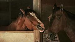 Friends (Christina's World : On & Off) Tags: animal nature horses farm portrait eyes emotions friends brown california fur love mood neighborhood outdoors sandiego textures topaz unitedstates usa 3676 committeeofartists
