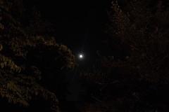 LunaandJupiier (michaelmaguire4) Tags: night sky