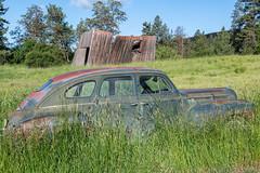Old dodge in a field in Palouse (jeff's pixels) Tags: palouse washington car field vintage