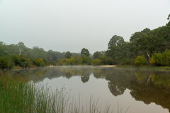 Shoalhaven River Ford (fate atc) Tags: australia nsw oallenfordrd oallenroad shoalhavenford shoalhavenriver water earlymorning inland mirror mist reflection still upperreachesshoalhavenriver