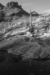 Pima Canyon (drumlan) Tags: pima canyon saguaro coronadonationalforest mountain rock stone stream creek reflection blackandwhite tucson arizona southwest southwestern monochrome desert sonorandesert water carnegiea gigantea