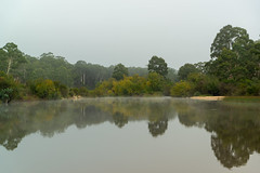 Upper Shoalhaven River (fate atc) Tags: australia nsw oallenfordrd oallenroad shoalhavenford shoalhavenriver water earlymorning inland mirror mist reflection still upperreachesshoalhavenriver