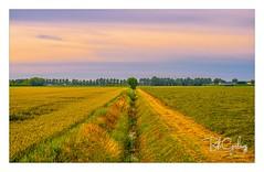 Quarrelling neighbours (Bob Geilings) Tags: field acre landscape view ditch tree green yellow sky grain mood haarlemmermeer netherlands