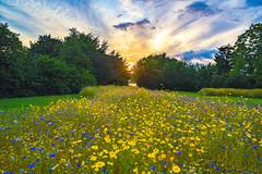 Ain't no sunshine when she's gone (Paul wrights reserved) Tags: landscape landscapes flower flowers sun sunset sunsets botanical sky skyscape skyscapes sliderssunday sundaysliders