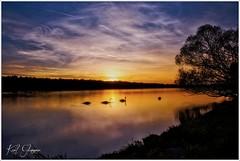 Donau Abendstimmung (Karl Glinsner) Tags: landschaft landscape österreich austria oberösterreich upperaustria outdoors abend evening sonnenuntergang sunset abendrot donau danube himmel wolken sky clouds schwäne swans