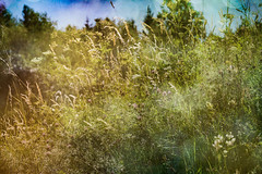 Mountain meadow (judy dean) Tags: 365the2019edition 3652019 day194365 13jul19 judydean 2019 france hautsavoie meadow flowers grasses trees mountains texture ps